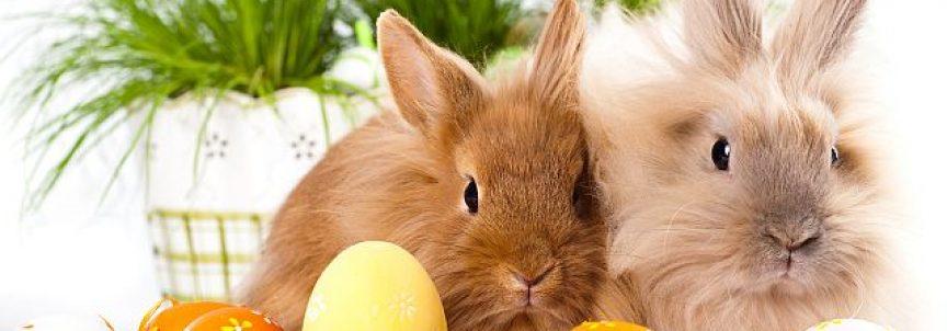 Trochę jaj i trochę na poważnie! :)
